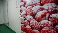 newrest raspberries with powdered sugar on them